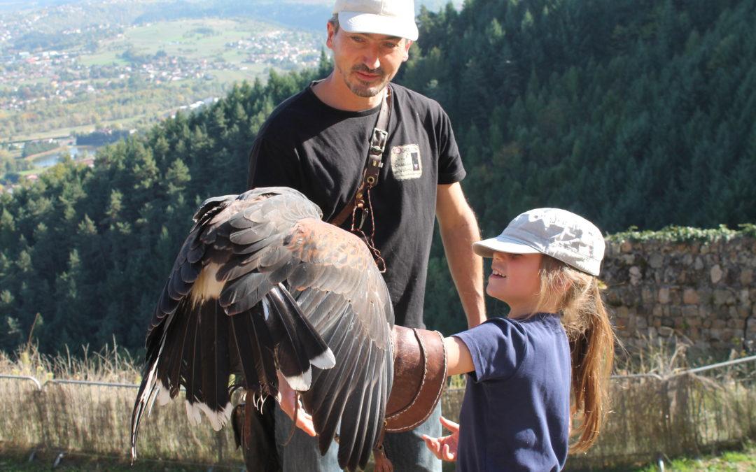 Balade en compagnie d'oiseaux de proie